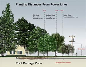 Planting distances from powerlines graphic