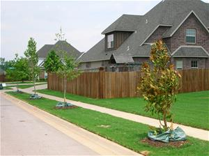 Freshly planted trees along a sidewalk in a residential neighborhood